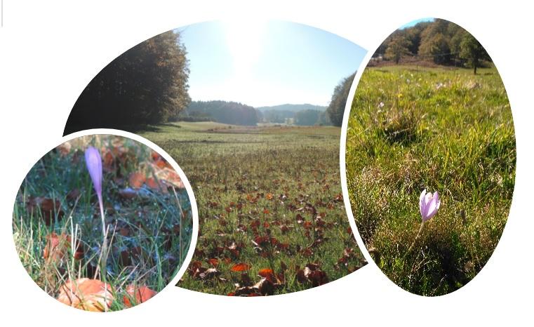 Octobre En Haut Languedoc
