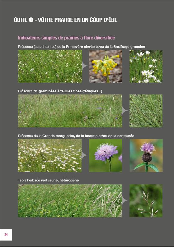 Les plantes dans ma prairie Guide