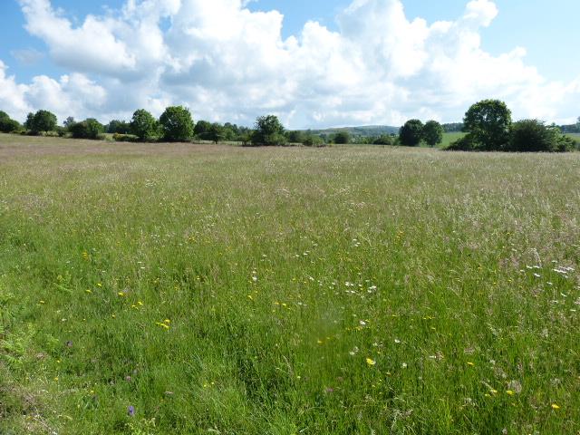 Prairie du plateau de l'Aubrac