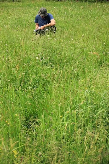 observation prairies naturelles