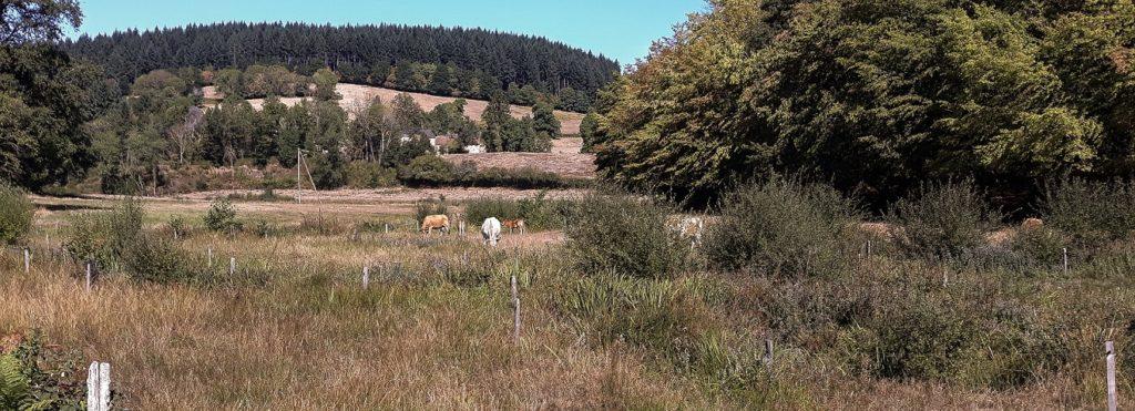 sécheresse et ressource pastorale en été